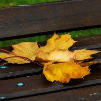 Осенней жёлтый лист..... :: Сергей К.