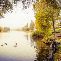 Туманное утро на Цне.......... :: Александр Селезнев