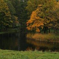 Прохладность зеркала воды :: Владимир Гилясев