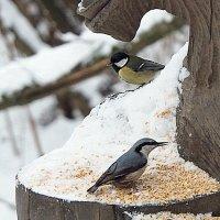 помогите птахам :: Олег Лукьянов