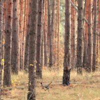 Лесными Тропами :: Владимир Марков