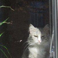 Кошка на окошке :: Дмитрий Никитин