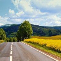 Дорога в май.. :: Надежда