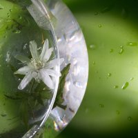 Цветочек... :: Sergey Apinis