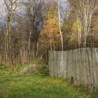 Ярко природу раскрасила осень... :: Владимир Буравкин