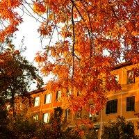 Золотая осень на закате :: Светлана