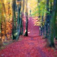 Лес в осеннем наряде. :: donat