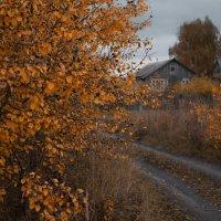 Осень в деревне :: Илья Попов