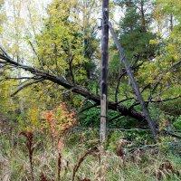 Лесные завалы :: Катя Бокова