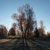 Первые морозы! :: Андрей Буховецкий