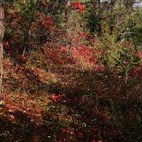 Осень в огоньках красок :: Валерий Дворников
