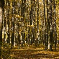 Прогулка в золотой осени. :: Ольга Винницкая (Olenka)