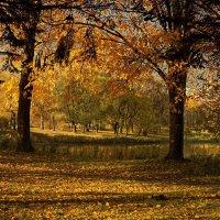Золотые дерева :: Владимир Гилясев