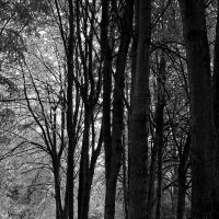 Остывший лес ... :: Лариса Корженевская