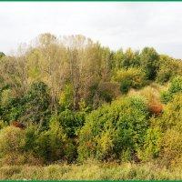 Осенний пейзаж... :: Николай Дони