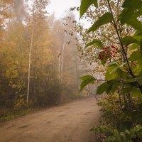 Калина у дороги. :: Сергей Щелкунов