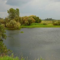 Дождь на озере. :: nadyasilyuk Вознюк
