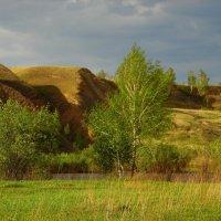 Берёзка у реки. :: nadyasilyuk Вознюк