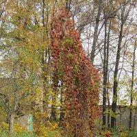 Осенняя краса :: Дмитрий Никитин