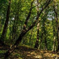 лес :: Михаил