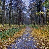 дорога в осень :: юрий иванов