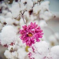 Зима в октябре :: Виктория Караваева