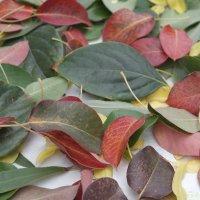 Краски осени :: yusuf alili