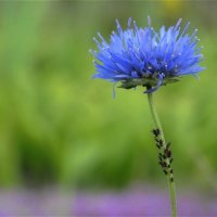 цветок и его жители :: Яна Ягнюк