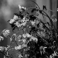 Мои последние ромашки. :: Валерия  Полещикова