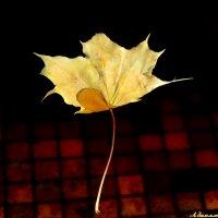 И снился сон о позднем листопаде.. :: Андрей Заломленков