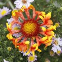 Несколько цветов вместе :: esadesign Егерев