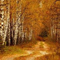 по дороге в осенний лес :: Александр Прокудин