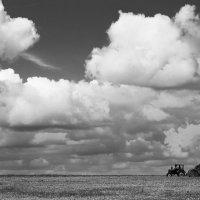 Уборка урожая.... :: Sergey Apinis