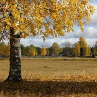 Осень , желтые листья... :: Александр Широнин