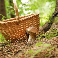 Меня  у дерева он ждал... :: Елена Kазак