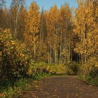 Аллея парка в осень пролегла :: Владимир Гилясев