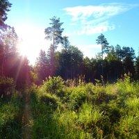 в лес :: linnud