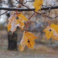 Осенние заморозки :: Валерий Толмачев