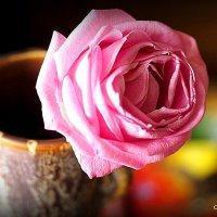 красота от природы-одинокая роза :: Олег Лукьянов