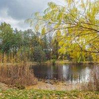 Осень в пасмурный день :: Виталий