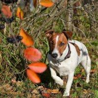 Собак на осень похожая, с рыжим пятном на спине... :: Наталья Natupans