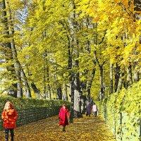 Осенью в Летнем саду. :: Senior Веселков Петр
