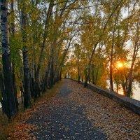 Осеннее солнышко заглянуло на аллею :: Екатерина Торганская