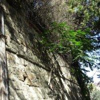 Тяга к жизни сквозь каменную стену :: татьяна