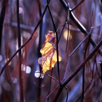 """Осенний """"фонарик"""" :: Лара (АГАТА)"""