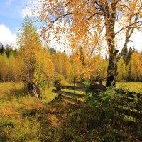 Осень в Перерве... :: Александр Широнин