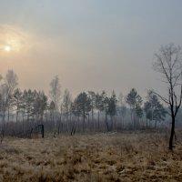 Туман. :: Анатолий Корнейчук