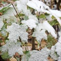 Под первым снегом :: ivolga