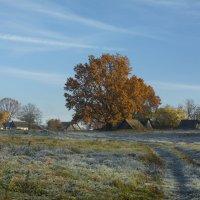 Морозное утро в октябре :: Михаил Онипенко