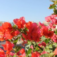 Нежные краски раннего утра :: Юлия Грозенко